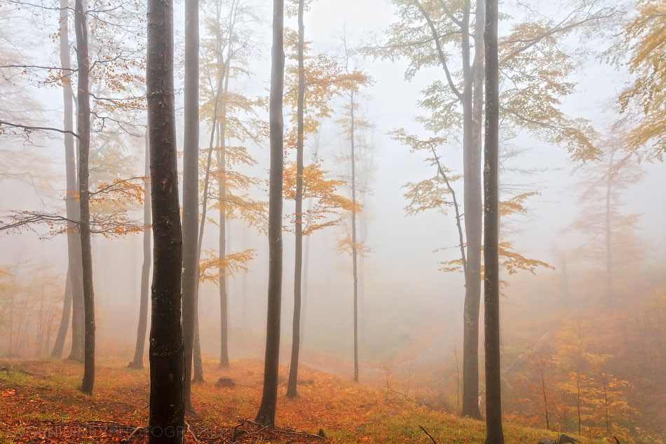 Misty autumnal beech forest in Central Balkan