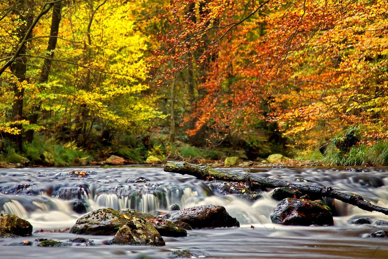 Herfst Ardennen 2