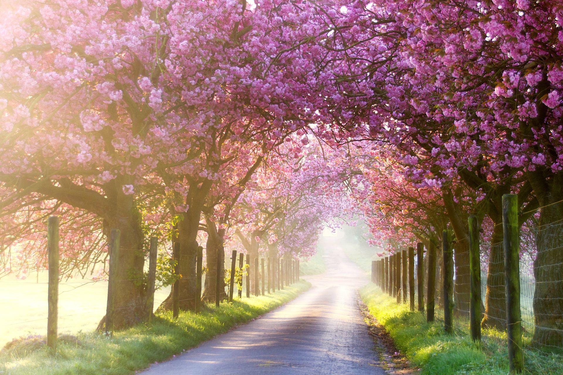 Pink morning (2)