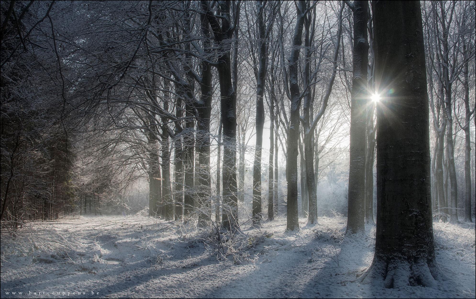 a winter fairytale 2b
