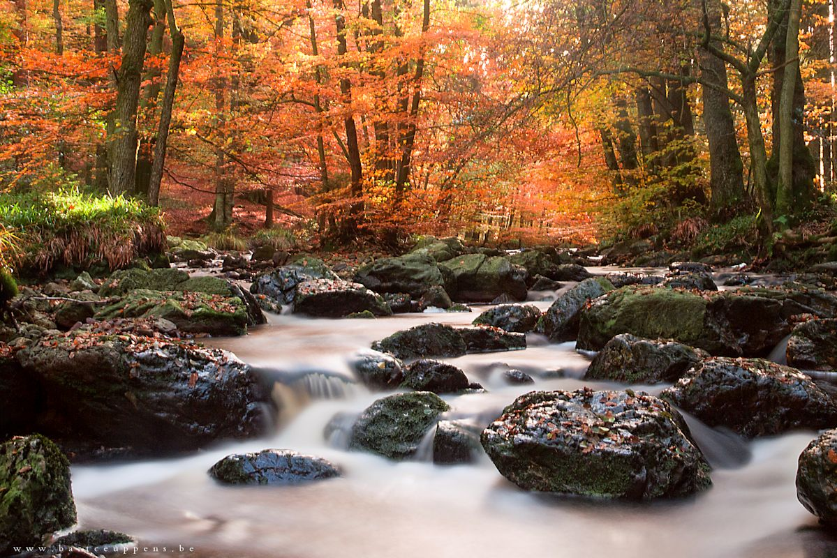 autumn flow 8
