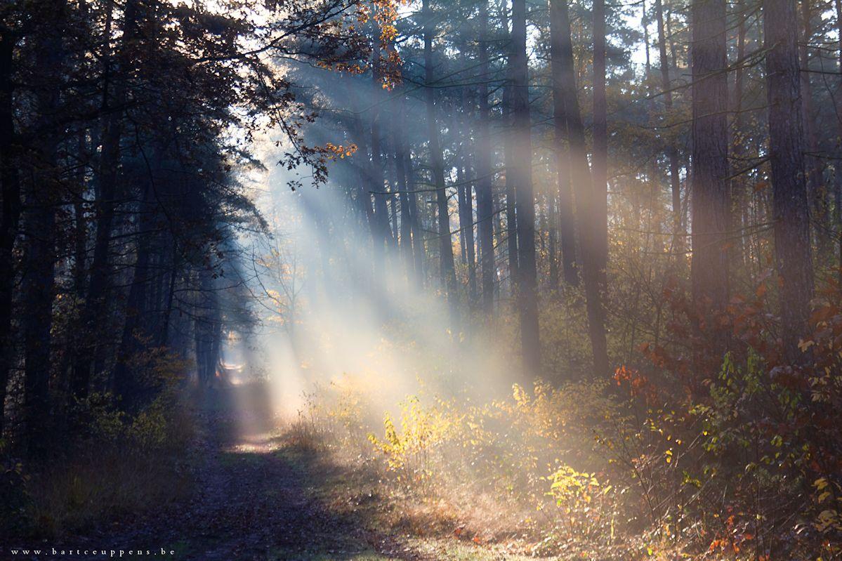 autumn walk 10
