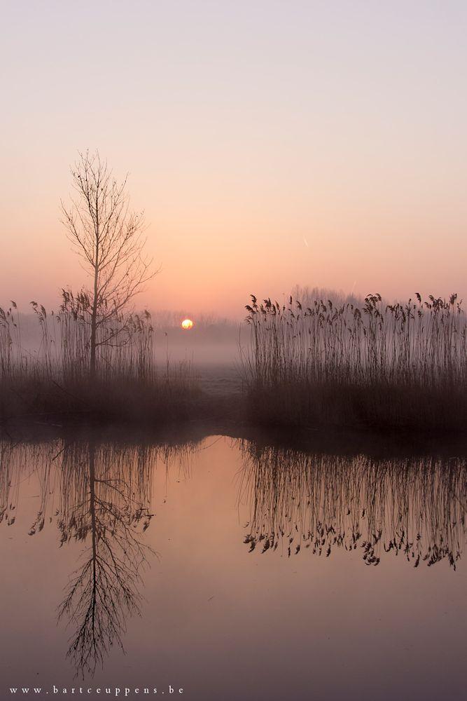 morning mist 11 b