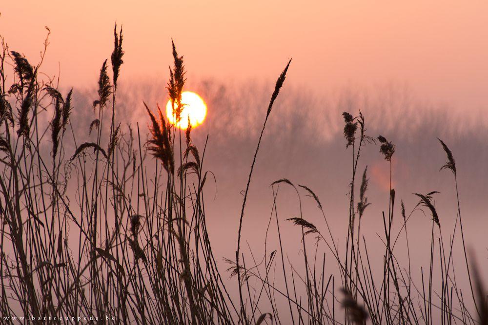 morning mist 6 b