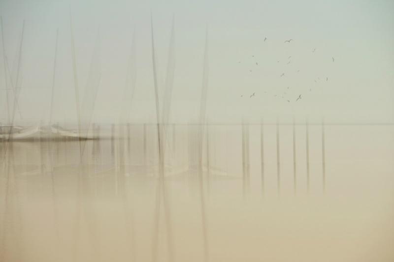 2014-10-31-057birds