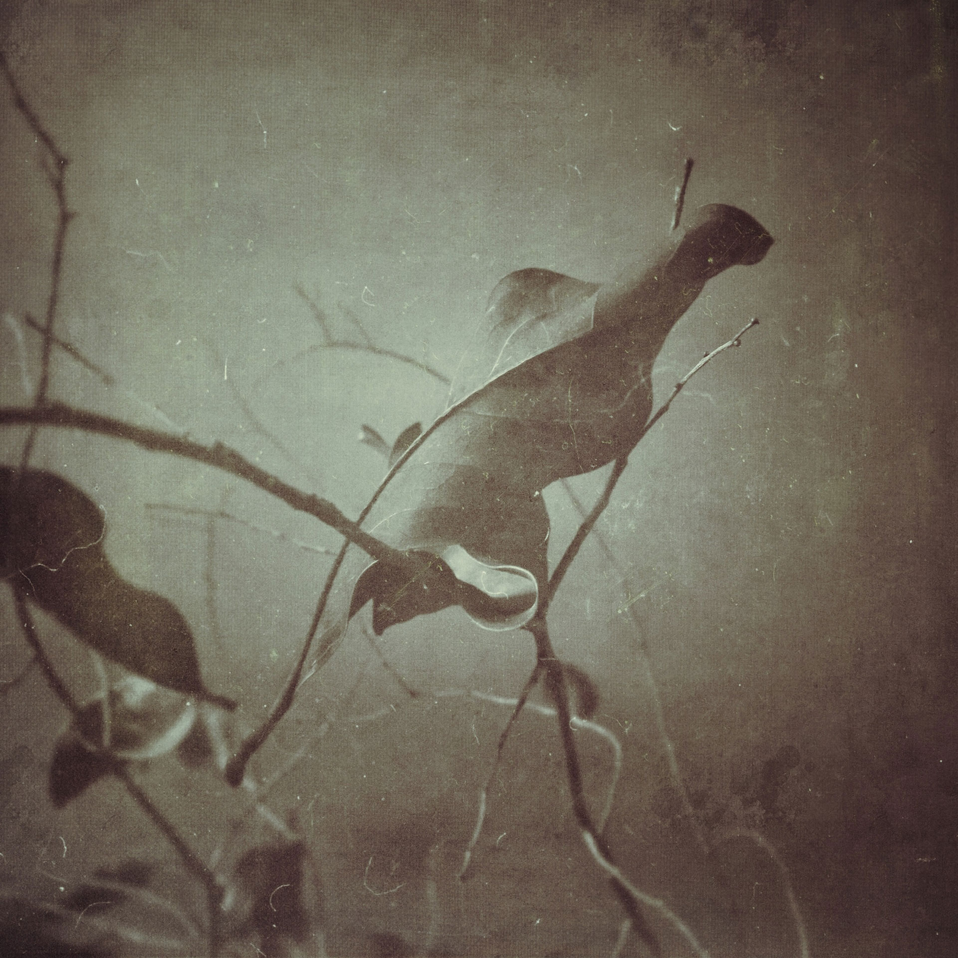 Josephine_Cardin_article_10