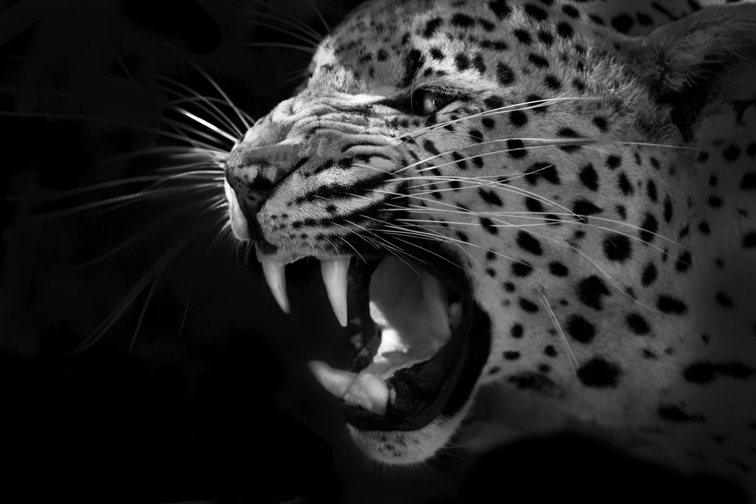 Leopard-2bearbeitet
