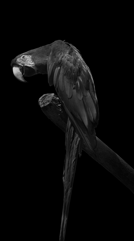 Papagei-1-fertig