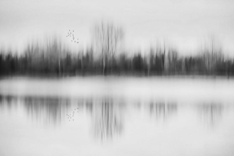 STM_2014-12-18-033sw_birds